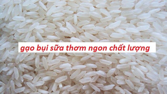 cung-cap-gao-bui-sua-thom-ngon-chat-luong