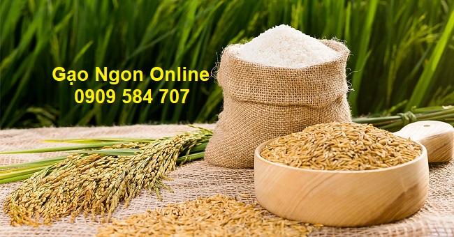 Giá gạo hôm nay tại TPHCM