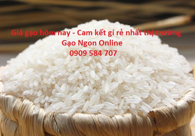 Giá gạo tại tphcm