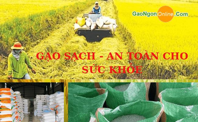 Cửa hàng chuyên bán gạo từ thiện - đóng túi theo yêu cầu toàn TpHCM cho các mạnh thường quân