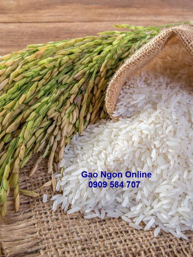 Cung cấp Gạo Lài Miên giá rẻ tại tphcm