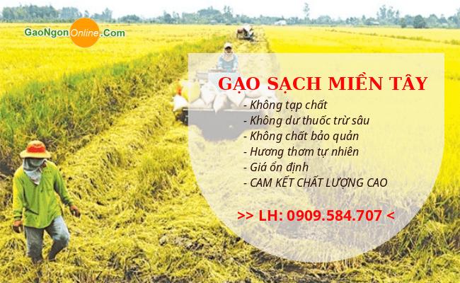 Gạo Thơm Thái Lan Đặc Sản Nhập Khẩu