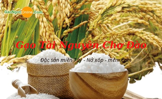 Gạo Tài Nguyên là giống gạo đặc sản và được trồng theo mùa. Một mùa là 5-6 tháng nên gạo Tài Nguyên Chợ Đào sẽ có 2 mùa là Đông Xuân và Hè Thu
