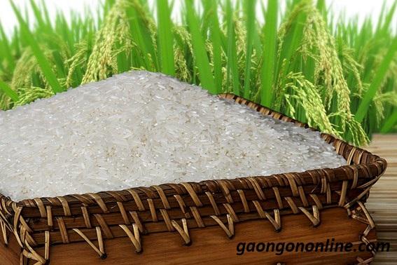 Danh sách các loại gạo