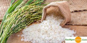 Bí quyết chọn gạo ngon