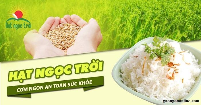 đại lý gạo hạt ngọc trời tphcm