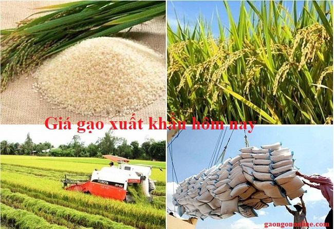 Giá gạo xuất khẩu hôm nay