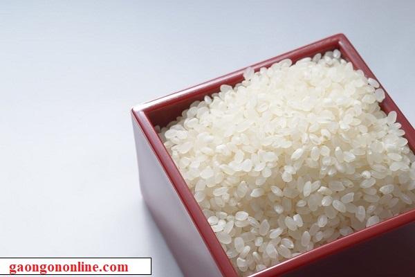 bán gạo nhật nhập khẩu