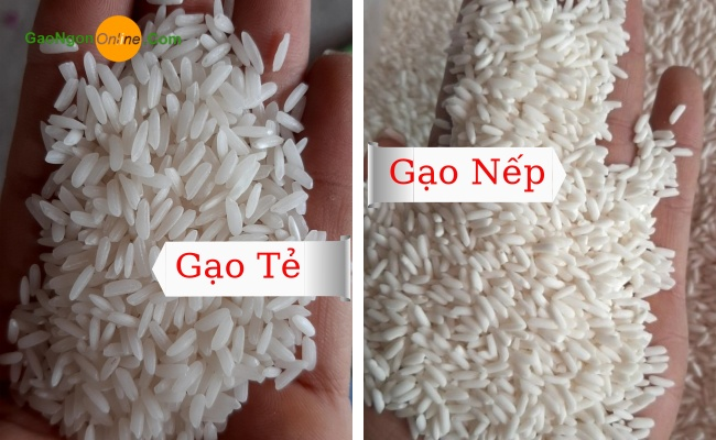 Gạo nếp thái lan nguyên liệu chính để chế biến các ăn ngon truyền thống của Việt Nam