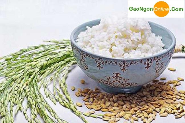 Đại lý cung cấp Gạo Nhật Bản nhập khẩu