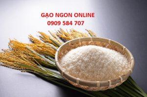 Gạo Nhật Bản nhập khẩu