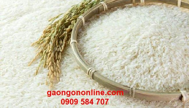 Gạo st25 ( gạo Sóc Trăng) giá bao nhiêu?