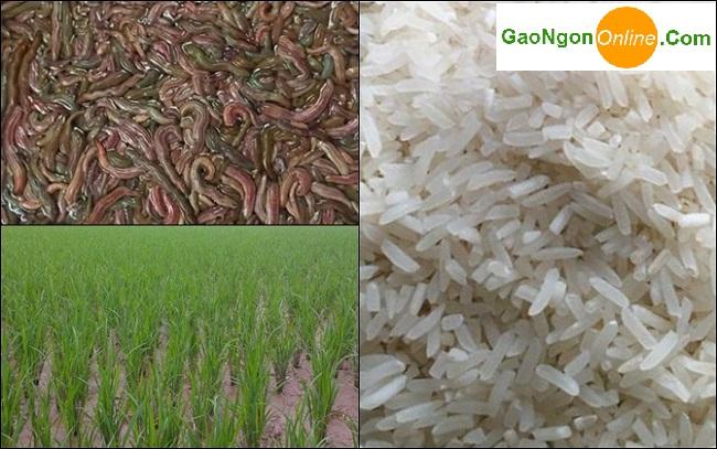 Gạo Ngỗng giá rẻ tại tphcm