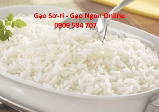 đại lý cung cấp gạo Sơ ri mùa tết