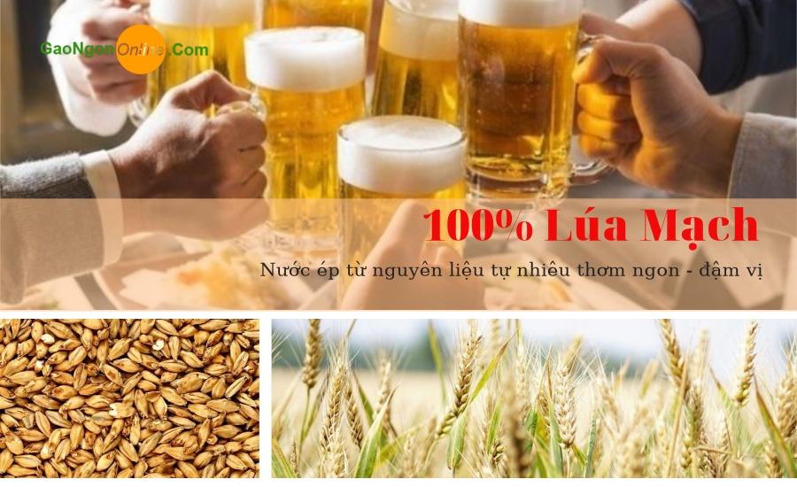 Lúa mạch sản phẩm tuyệt vời nhất dành cho sức khỏe con người phù hợp với mọi lứa tuổi