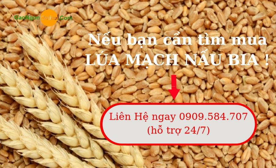 Gạo Ngon Online - Điểm cung cấp lúa mạch uy tín chất lượng tại Hồ Chí Minh, sự lựa chọn đang tin cậy của tất cả các doanh nghiệp, đại lý